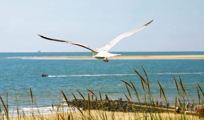 Nordsee vor Borkum