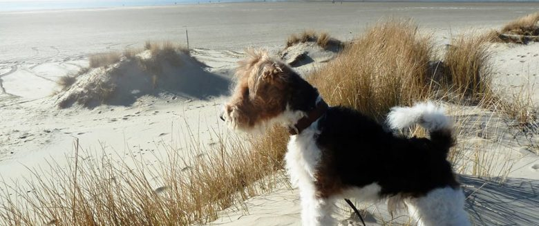 Hunde auf Borkum