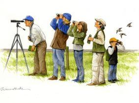 vogelbeobachter_cut